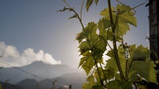 vineyard estate in Sicily in territory of Etna